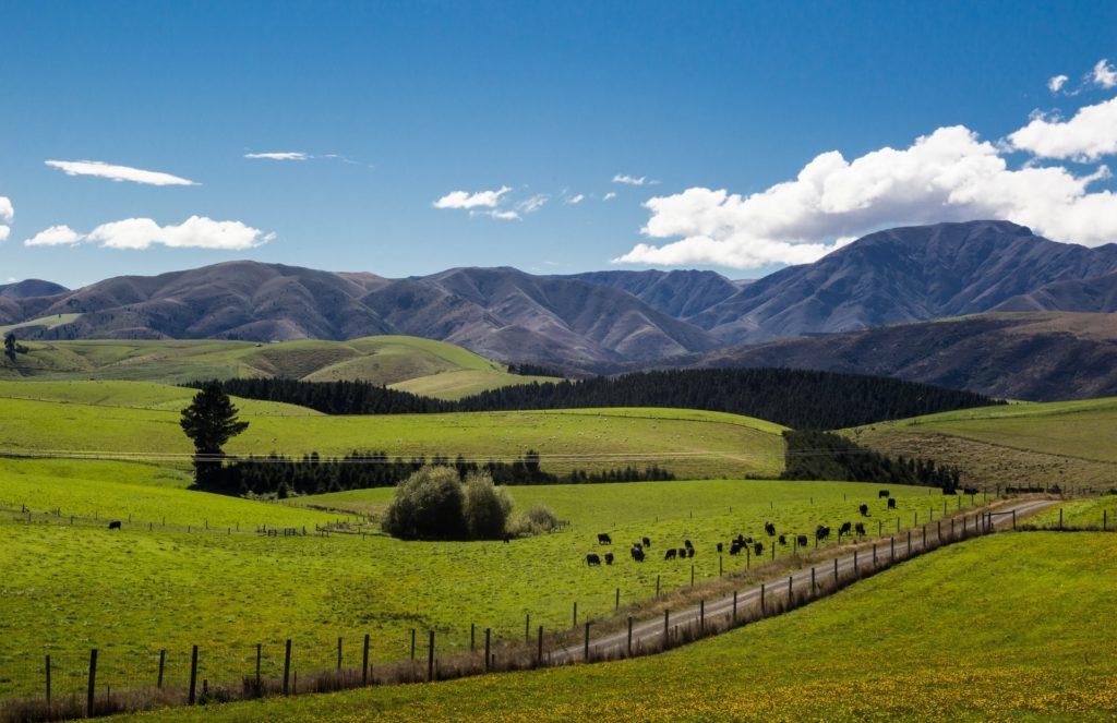 Auswandern nach Neuseeland bild 2