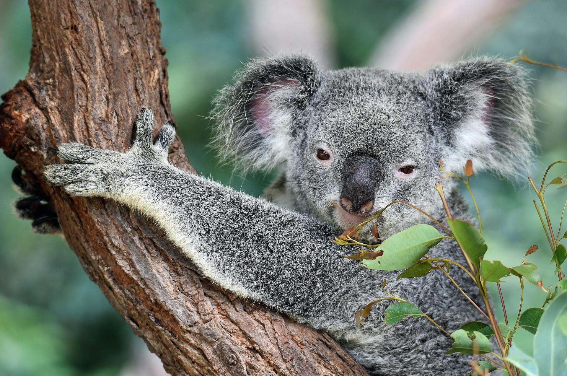 Auswandern nach Australien bild 2